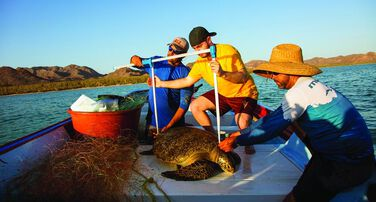 Saving Sea Turtles and Transforming the Future of Sustainable Fishing